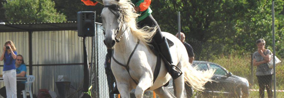 E' morto Toro il cavallo di Alessandro Ugolini